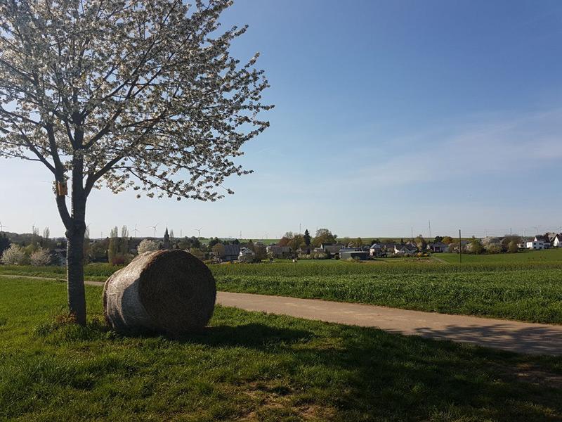 Blick auf Binningen