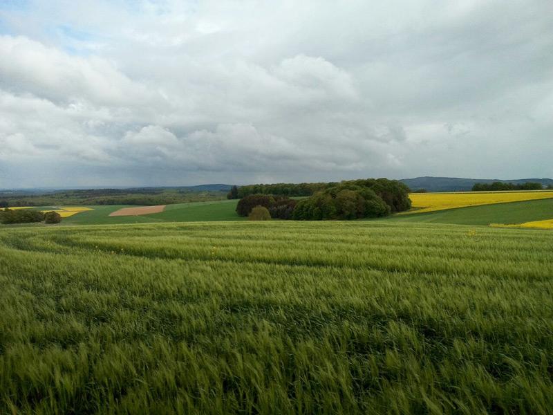 Landschaft Binningen
