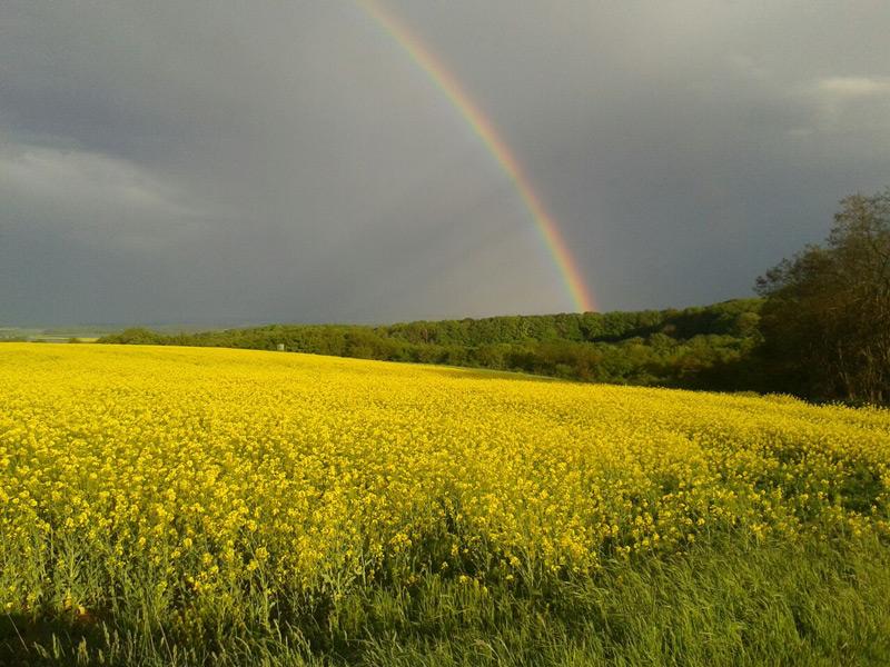 Regenbogen Felder Binningen